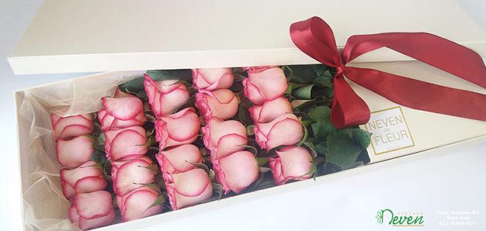 Roza ruže u kutiji